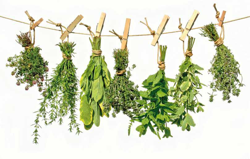 Consejos para secar hierbas o plantas aromáticas y medicinales en casa: