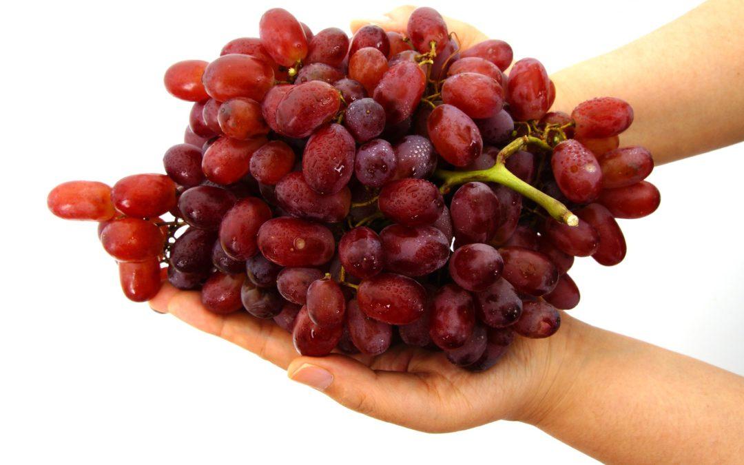 Uva, la sangre de la vida