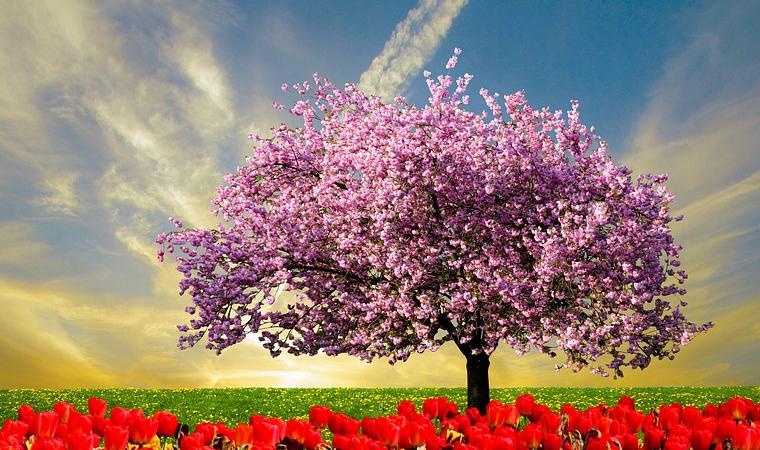 El almendro, árbol de la primavera