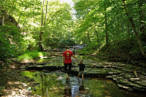 Una nueva terapia natural: Shinrin-yoku, el baño forestal