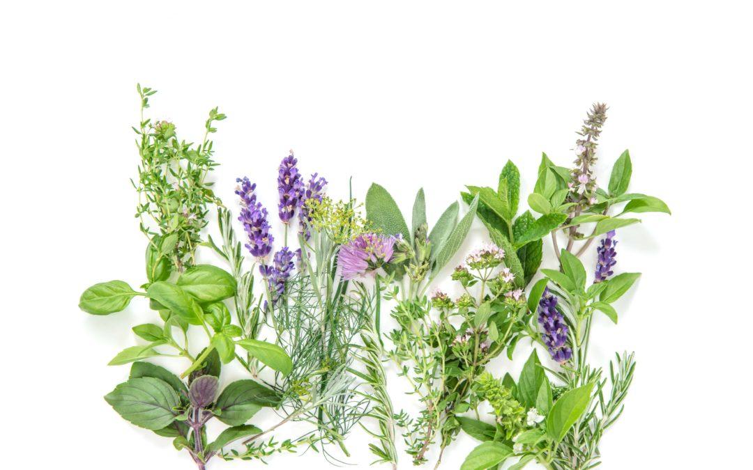 5 plantas medicinales que debes conocer